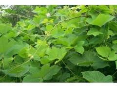 厂家供应优质提取物:葛根提取物 葛根素葛根黄酮10-99%