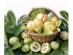藤黄果提取物  50%HCA 羟基柠檬酸 罗望果提取物