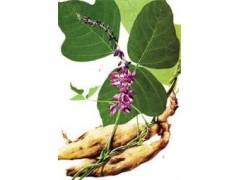 供应葛根提取物:预防与治疗、血糖血脂的调节、更年期症状调节