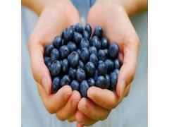 蓝莓果粉 水溶性好 冲剂饮料首选 现货供应中
