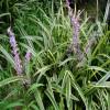 植物提取物厂家供应燕麦草提取物,燕麦提取物