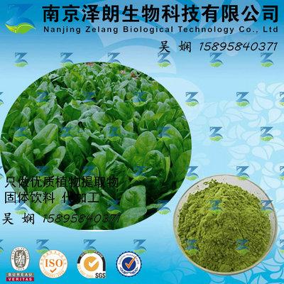 菠菜浓缩粉 工厂生产 代加工植物提取物