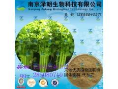 芹菜浓缩粉 工厂生产 代加工植物提取物