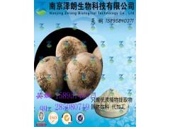 魔芋浓缩粉 工厂生产 代加工植物提取物