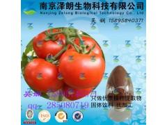 番茄浓缩粉 工厂生产 代加工植物提取物