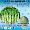 莴苣浓缩粉  工厂生产 代加工植物提取物