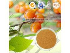 沙棘提取物 有现货 代加工植物提取物 工厂生产