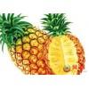 菠萝浓缩粉 工厂生产 代加工植物提取物