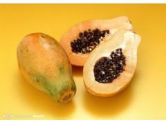 木瓜浓缩粉 工厂生产 代加工植物提取物