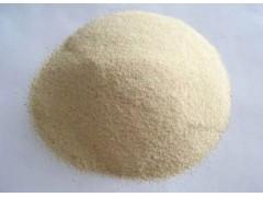 大大量提供价廉物美的植物提取物 大蒜浓缩粉