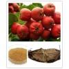 供应山楂提取物 山楂黄酮25% 十年植提厂家专业生产