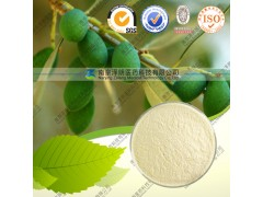 供应橄榄叶提取物 橄榄苦苷 厂家现货直销