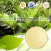 玉竹提取物 OEM加工 质量保证 价格优惠