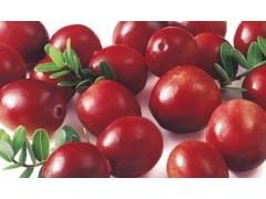 蔓越莓浓缩粉 OEM加工 价格优惠 厂家直销