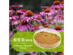 紫锥菊提取物 粉 紫锥菊多酚 菊苣酸 抗病毒