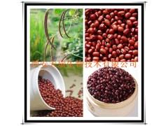 赤小豆提取物 红豆提取物 厂家大量现货