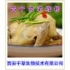 鸽子肉提取物西安千草生物现货直销