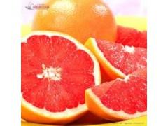 西柚浓缩粉提取物生产厂家