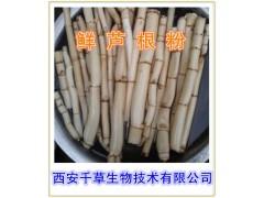 鲜芦根提取物  鲜芦根浓缩粉  鲜芦根粉