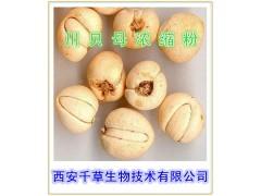 川贝母提取物 国家规定保健食品原料 现货正品直销