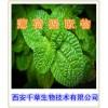 薄荷提取物 薄荷粉 浸膏粉 生产厂家 药食同源