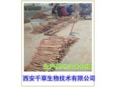 铁皮石斛提取物 金钗石斛提取物 石斛总碱 品质保证