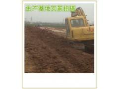 茯苓提取物 茯苓粉 药食同源 厂家生产