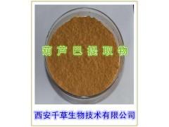 葫芦巴籽提取物 纯天然葫芦芭提取物 温肾助阳