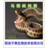 乌梢蛇提取物   乌梢蛇粉
