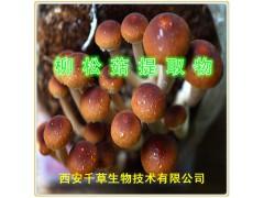 柳松菇提取物
