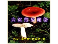 大红菇浓缩粉