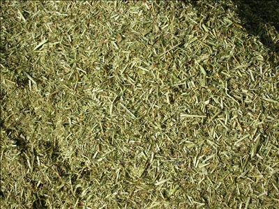 供应 优质 苜蓿草粉  厂家OEM代加工