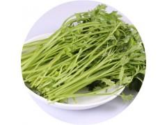 芹菜素 98%