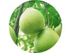 柚皮素 98%