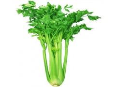 供应优质旱芹提取物 芹菜素98%