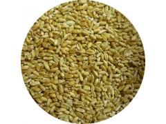陕西慧科供应 浮小麦提取物