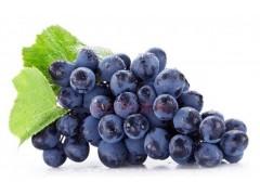 高品质葡萄籽提取物原花青素OPC 95%