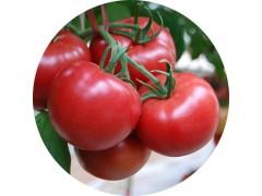 陕西慧科供应 番茄红素