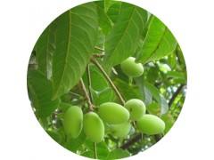 陕西慧科供应 橄榄叶提取物