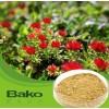 扬州红景天提取物价格 解痉止痛高质量红景天粉剂 厂家推荐