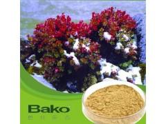 广州红景天提取物供应批发 提高排毒免疫力防晒增白美肤 巴科