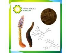 管花肉苁蓉提取物 松果菊苷 麦角甾苷