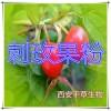 刺玫果提取物 国家规定保健品添加 纯植物提取 厂家专供