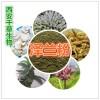 泽兰提取物 国家规定保健品添加 纯天然提取 厂家生产
