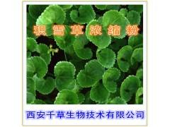 积雪草提取物 国家规定保健品添加 纯植物提取 厂家专供