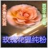 玫瑰花浓缩粉  药食同源 西安千草现货专供
