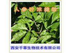 人参叶浓缩粉 纯植物提取