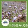 厂家供应露水草提取物蜕皮激素20%~98%均有销售