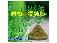 侧柏叶浓缩粉 纯植物提取
