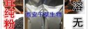 白桦茸提取物 纯天然浓缩 全水溶 厂家生产